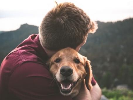 ¿Cómo sé si mi perro sufre de ansiedad por separación?