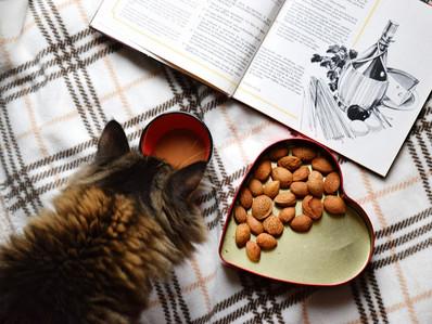 ¿Cuántas veces debe comer un gato y por qué?