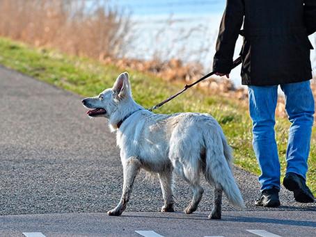 Robo de perros: ¿por qué ocurre y cómo evitarlo?