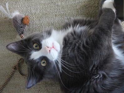 Juegos para gatos: divertidos y estimulantes