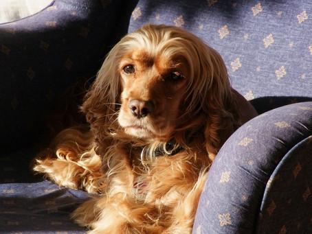 ¿Por qué los perros ven televisión?