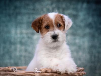 ¿Tu cachorro llora demasiado? ¡Evita esa mala conducta!