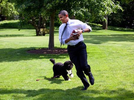 ¿Cuáles son los mejores ejercicios para perros y cómo realizarlos?