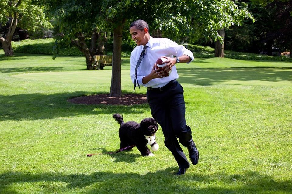 Los mejores ejercicios para ejercitar a tu perro