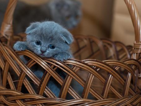 ¿Cómo saber qué edad tiene un gato?