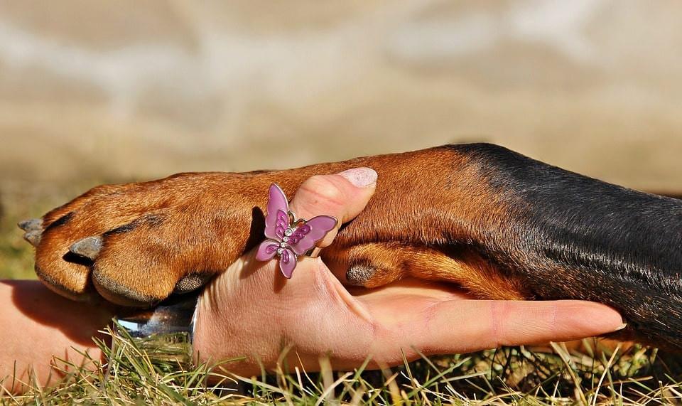 Aprende a cortarle las uñas a tu perro sin lastimarlo