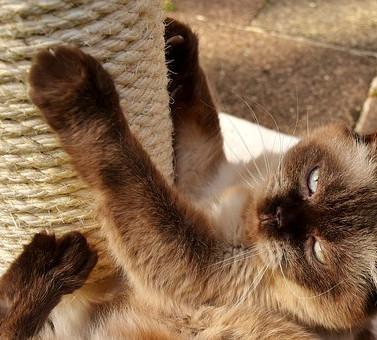 Recomendaciones para tener un gato cariñoso en casa