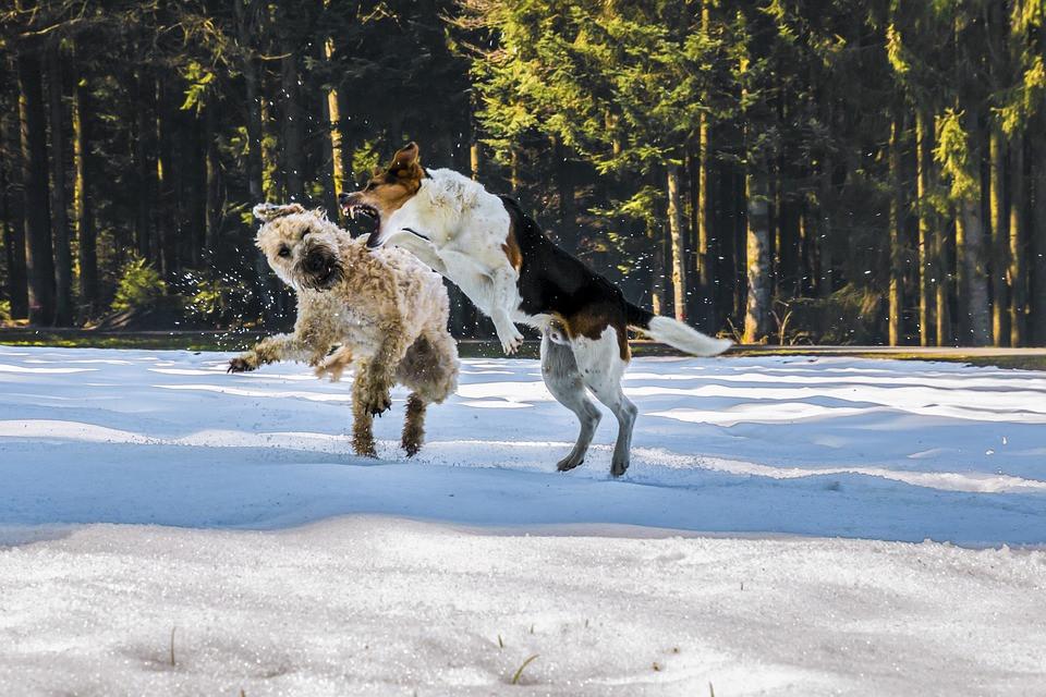 Ataque de perros qué hacer