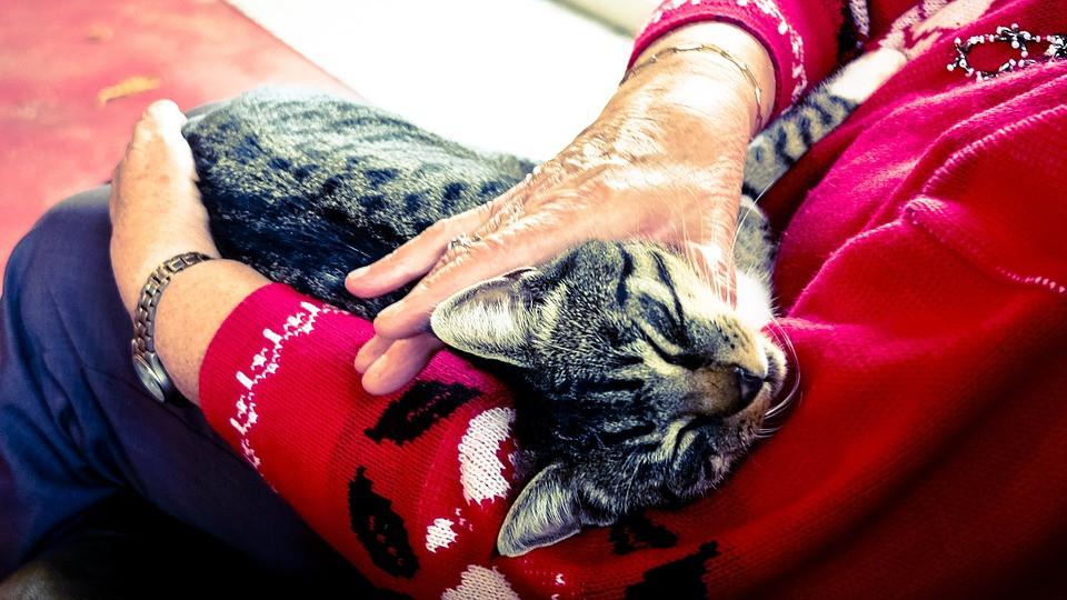 Promedio de vida de un gato