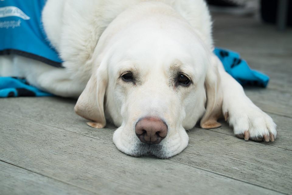 Perro acostado mostrando su nariz