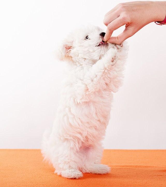 Medicamentos peligrosos para mascotas