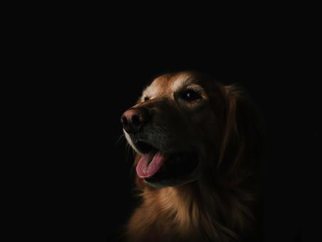 Manchas en la lengua de los perros: ¿lunares o enfermedad?