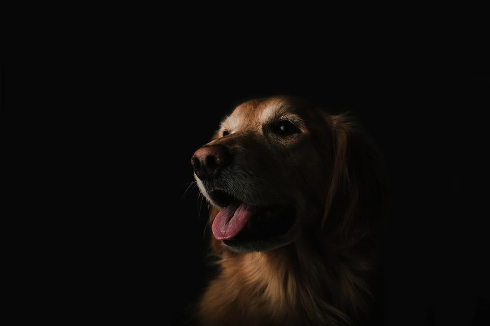 Por qué mi perro tiene manchas en la lengua