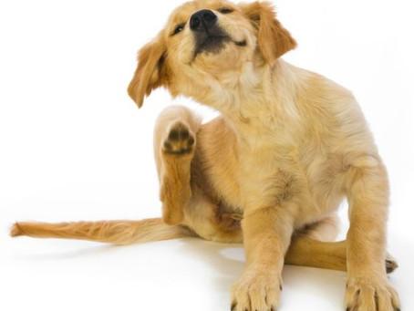 Perros con piel sensible: ¡te enseñamos a cuidarlos!