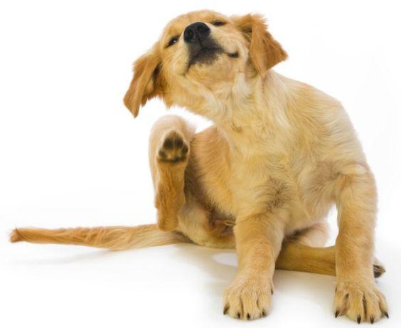 Perros con piel sensible