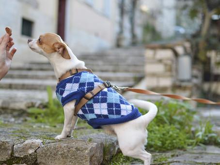 Alimento a granel: enemigo silencioso de tu perro