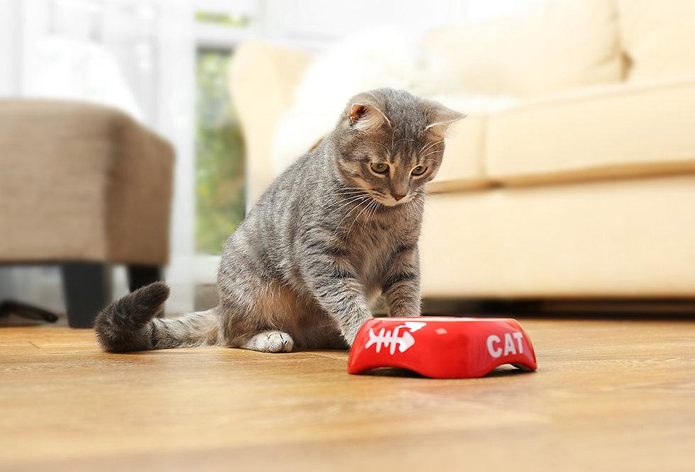todo lo que debes saber sobre la nutrición de tu gato