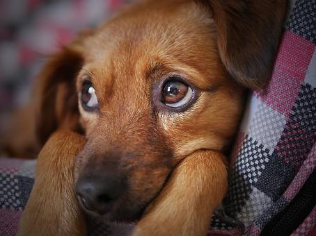 Envenenamiento en perros: ¿cómo identificarlo y cómo tratarlo?