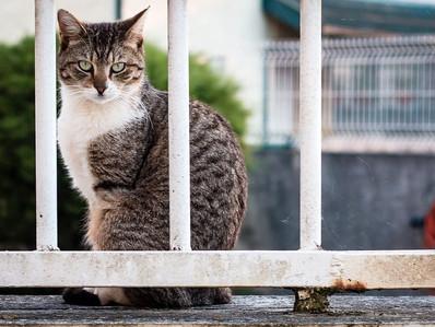 Enfermedades nutricionales en gatos: ¿Cuáles son y cómo tratarlas?
