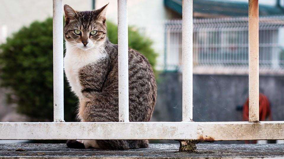 Enfermedades nutricionales en gatos