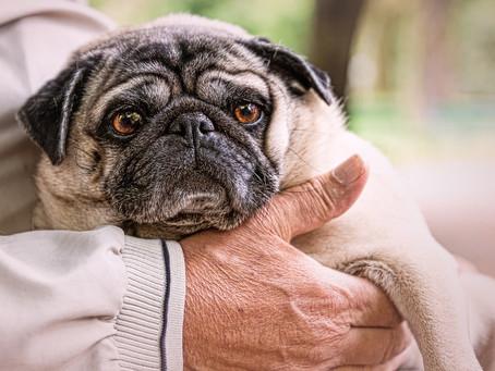 Vivir con un perro anciano: ¡todo lo que debes saber!