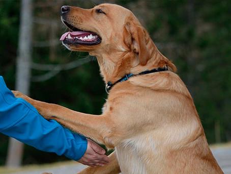 ¿Cómo ganar la confianza de un perro mediante el saludo?