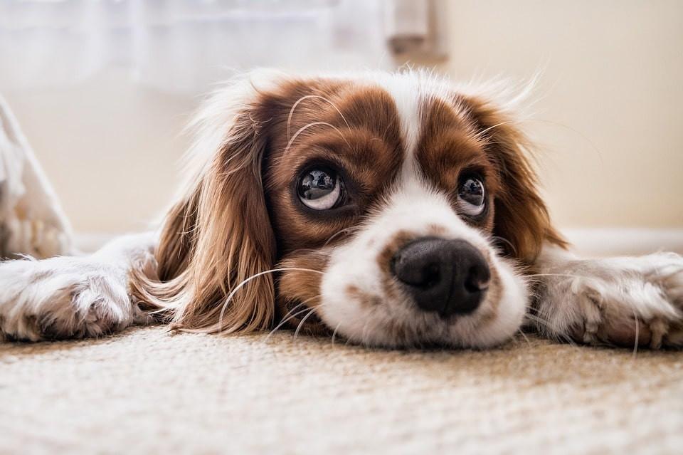 Donde puedes dejar a tu perro si vas de vacaciones