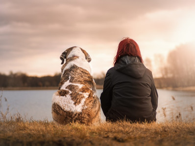 Tabla de pesos ideales para perros según razas y tamaños