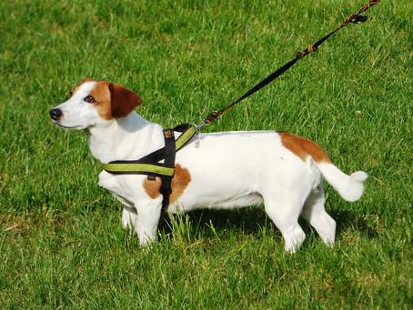 Mi perro tira de la correa, ¿cómo puedo evitarlo?