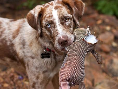 Juguetes dañinos para perros: ¡cuidado con los huesos de carnaza!