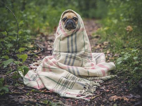 Enfermedades en perros sin vacunas: ¡letales y contagiosas!