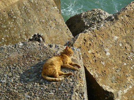 Beneficios del sol en los gatos: ¿cuáles son?
