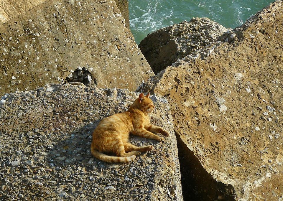 Cuales son los beneficios del sol en tu gato