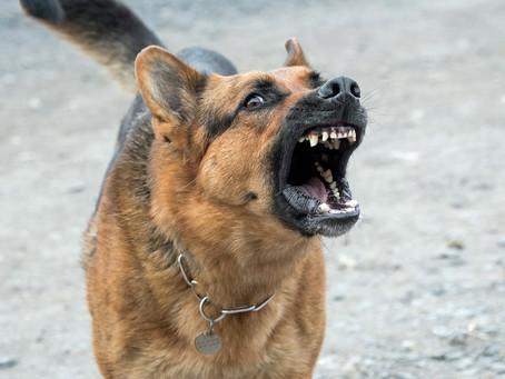 Nutracéuticos para perros: beneficios y riesgos