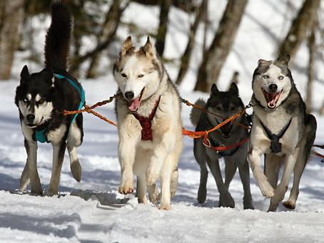 ¿Cómo es el carácter de los perros según cada raza?