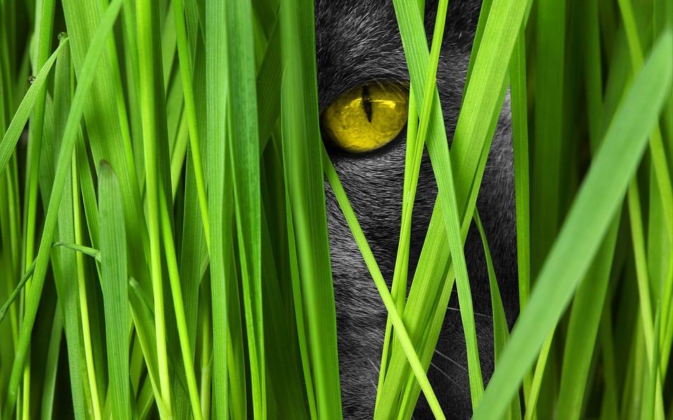 Por qué mi gato actúa extraño de noche