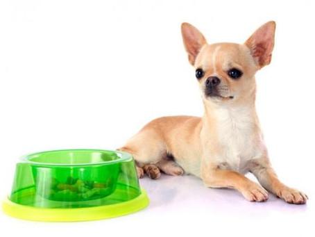 Comida para perros de raza pequeña