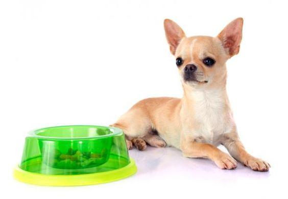 Cómo debe ser la comida de tu perro raza pequeña