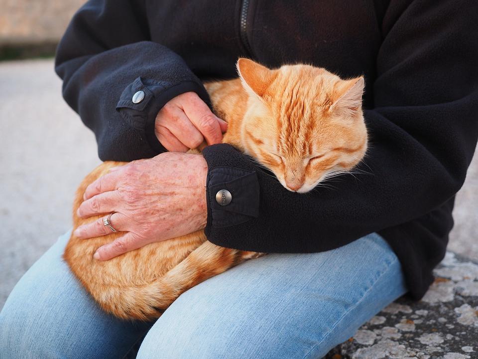 Cómo tener un gato cariñoso en casa