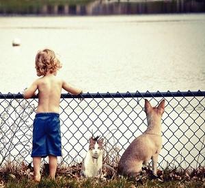 ¿Qué revela tu mascota de tu personalidad? ¿Eres perro o gato?