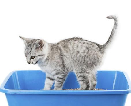 ¿Tu gato no usa la caja de arena? ¡Aquí las razones y las soluciones!