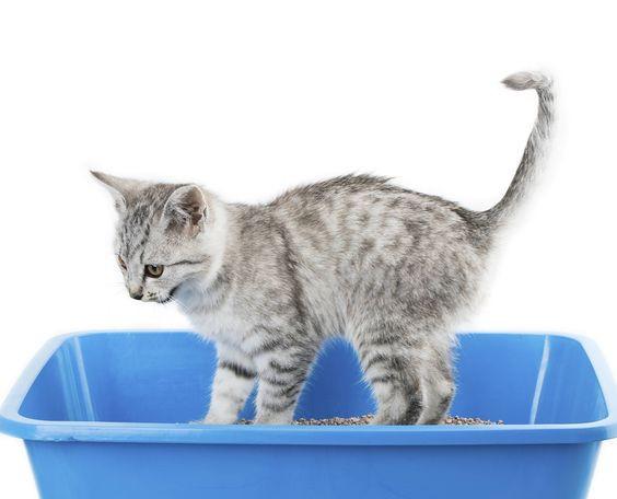 Por qué mi gato no usa la caja de arena