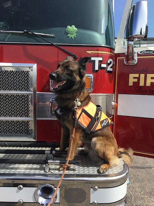 Perro héroe espera en camión de bomberos