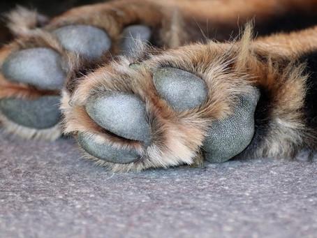 Almohadillas de los perros: daños y cuidados
