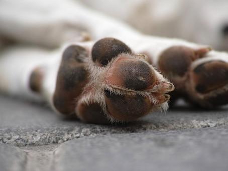 Consecuencias de no cortar las uñas a los perros