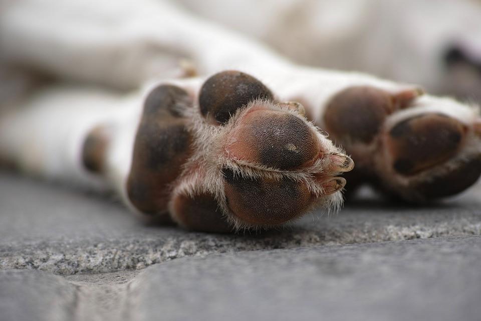 Corte de uñas en perros