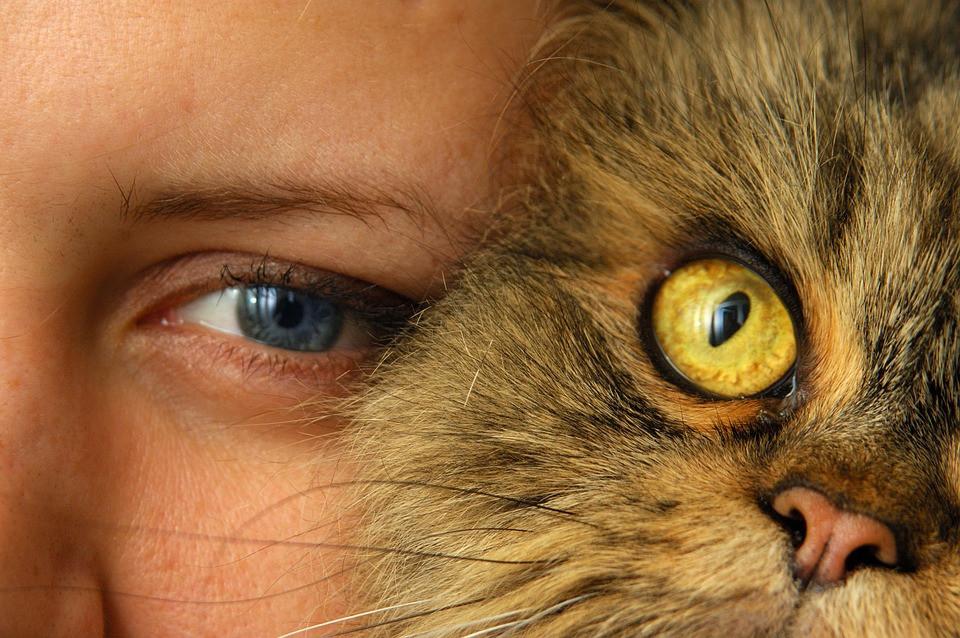 Lo que dice tu gato sobre tu personalidad