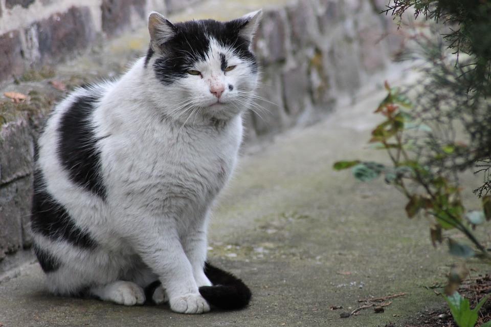 Qué pasa con los gatos cuando envejecen
