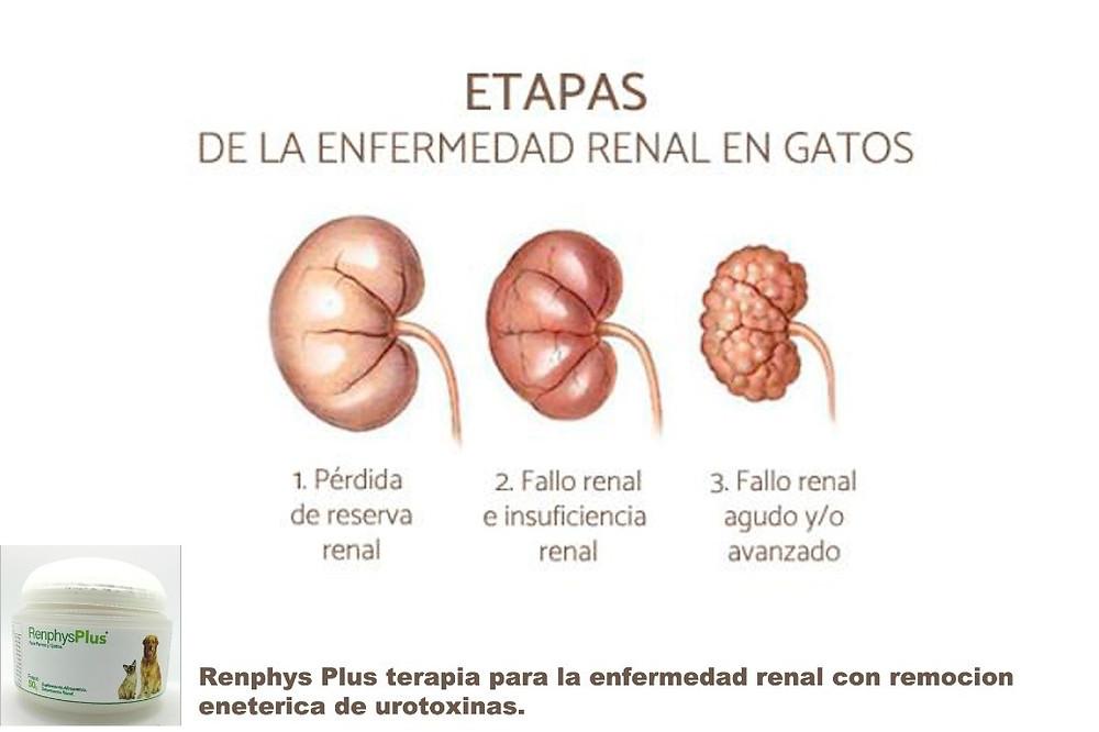 etapas de la enfermedad renal en perros y gatos