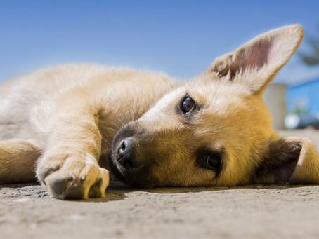 Alimento super premium para perros: ¿es la mejor opción?